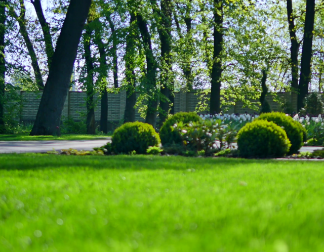 184-1846974_beautiful-garden-with-green-grass-and-bush-stock